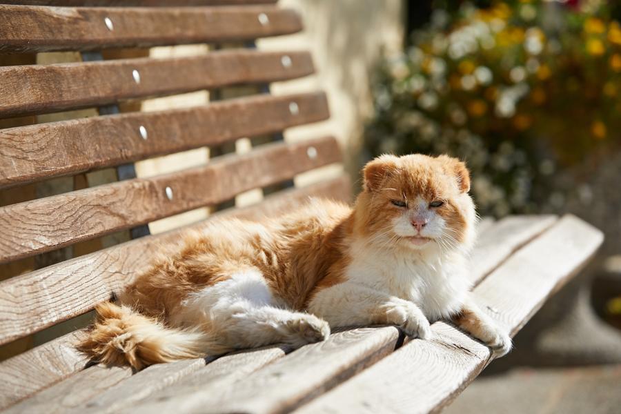 Spuckey - Nussis Katze