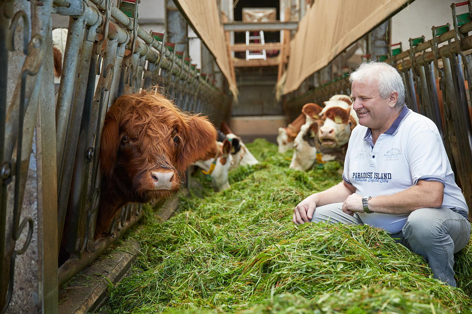 Nussi mit seinen Wagyu Rindern