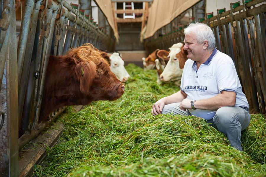 Nussi mit seinen Wagyu-Rindern